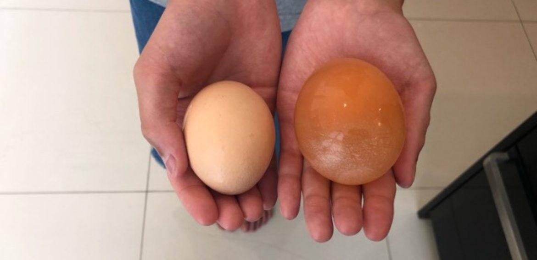 科学の実験 スケルトン卵 / Science Experiment – Skeleton Egg